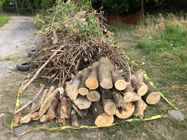 Logs and branches stacked neatly for swift removal.