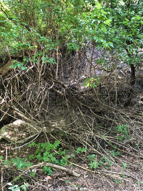 Before: This is an example of the terrain tackled and cleared by the Wilson Day volunteers